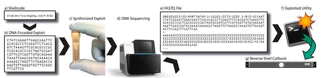 1503873393 688 nucleotidos usados para inyectar malware en muestras de adn jugando a ser root con el adn - Nucleótidos usados para inyectar malware en muestras de ADN. Jugando a ser ROOT con el ADN.