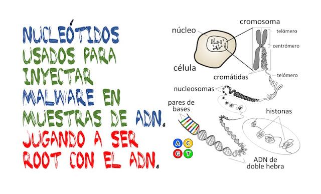 nucleotidos usados para inyectar malware en muestras de adn jugando a ser root con el adn - Nucleótidos usados para inyectar malware en muestras de ADN. Jugando a ser ROOT con el ADN.