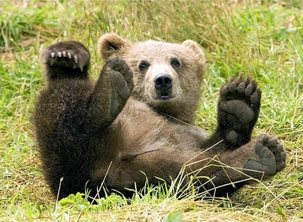 Les avocats de Microsoft sonnent la chasse à l'ours Sécurité, Noms de domaine, Microsoft, Cybercriminalité