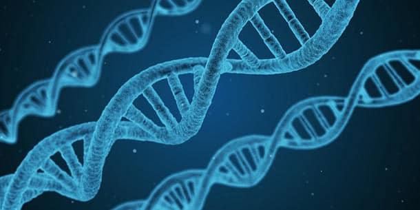 le chiffrement du genome pourrait permettre de securiser vos donnees adn - Le chiffrement du génome pourrait permettre de sécuriser vos données ADN
